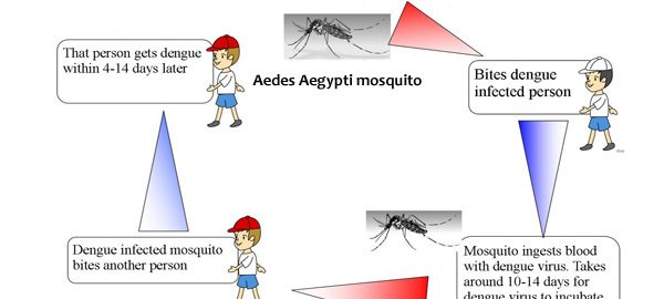 How Dengue Fever Spreads?