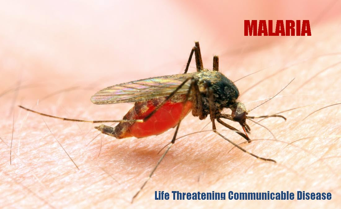 What is Malaria? Is it a Communicable Disease?